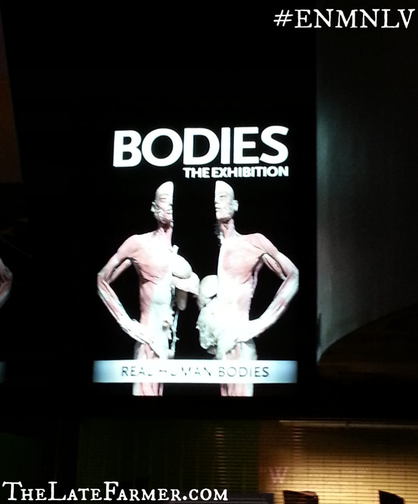 Bodies The Exhibition - TheLateFarmer.com
