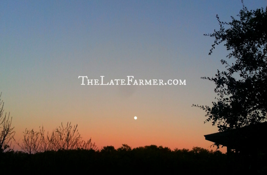 Day 11 - 2014 - TheLateFarmer.com